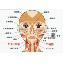 他の写真1: とじろーくん M メディカル(歯科用口唇筋力固定装置)